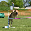 Bardney dog show-61