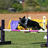 Bardney dog show-94