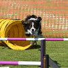 Bardney dog show-99