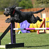 Bardney dog show-90