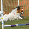 Bardney dog show-75