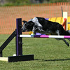Bardney dog show-92