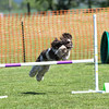 Bardney dog show-45