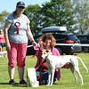 Bardney dog show-79