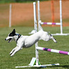 Bardney dog show-82