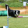 Bardney dog show-60