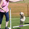 Bardney dog show-68