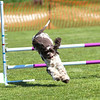 Bardney dog show-44
