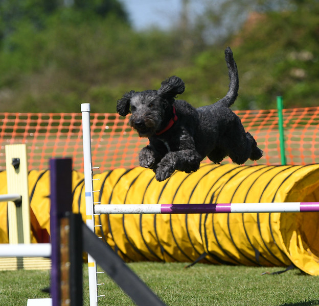 Bardney dog show-88