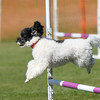 Bardney dog show-80