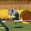 Bardney dog show-81