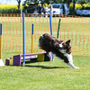 Bardney dog show-43