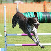 Bardney dog show-52