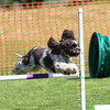 Bardney dog show-46