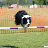 Bardney dog show-59
