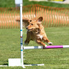 Bardney dog show-72