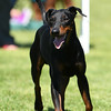 Bardney dog show-20