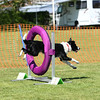 Bardney dog show-48