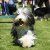 Bardney dog show-15