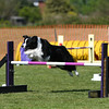 Bardney dog show-98