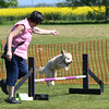 Bardney dog show-69