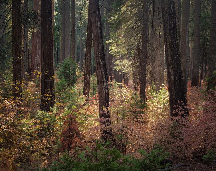 Adorned Forest