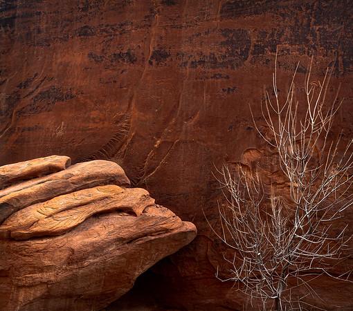 Shrub and Sandstone