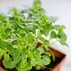 Barilla-Gluten-Free-Rotini-Salad-1623