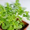 Barilla-Gluten-Free-Rotini-Salad-1627