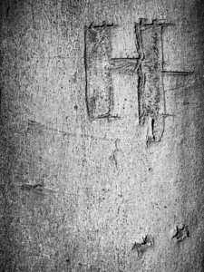 Tree trunk graffiti - Upper Barn Copse
