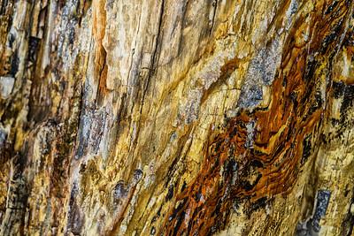 Barkscape: Petrified Wood, Ginko Petrified Forest | Vantage, Washington