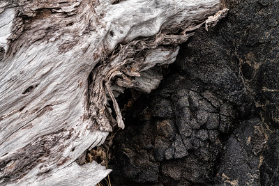 Barkscape: Kane and Pele | Hawaii Volcanoes National Park