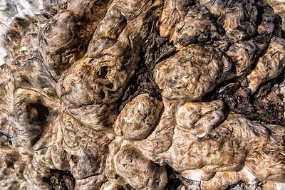 Barkscape: Driftwood | Ebey's Landing | Ebey's Landing National Historic Preserve