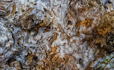 Barkscape: Driftwood | Mukilteo