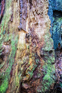 Rainbow Wood #7: Redwood National and State Park