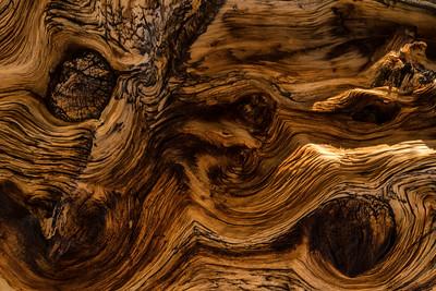 Barkscape: Bristlecone Pine | Great Basin National Park