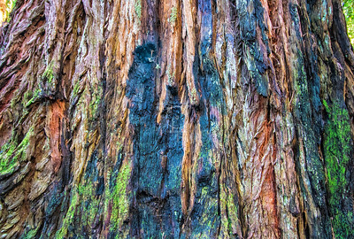 Barkscape: Rainbow Wood, Redwood | Redwood National Park