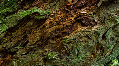 Barkscape: Carbon River Rainforest | Mt. Rainier National Park