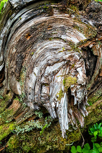 Barkscape: Quinnault Rainforest | Olympic National Park