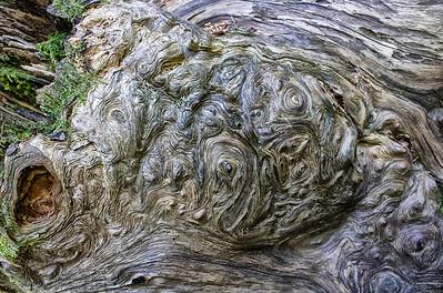 Barkscape: Spruce, Grove of the Patriarchs | Mt. Rainier National Park