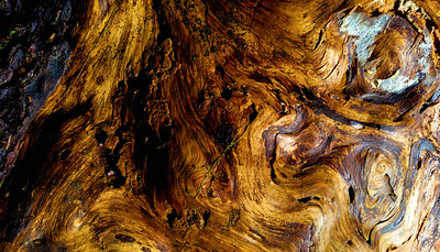 Barkscape: Hoh Rainforest | Olympic National Park