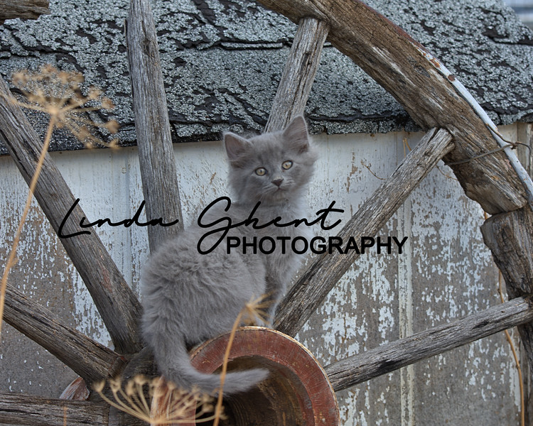 Wagon Wheel Kitty