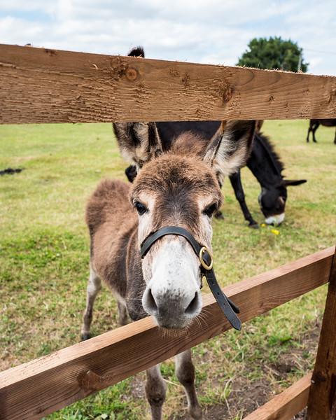 Alec's farm donkeys with Leica Q