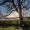 Barnby Dun Tree sunburst