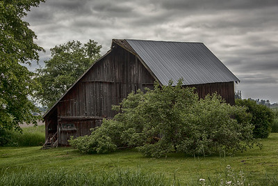Old Barn Fir Island 5-24-15