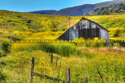 yellow-flowers-barn_2020