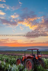 lompoc tractor-0518