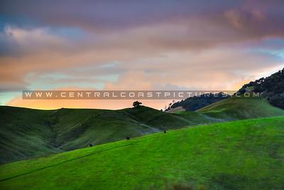 cambria hills-8384
