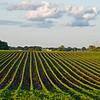 Minnesota farm field