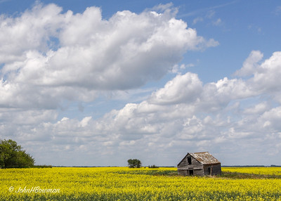 Sinking in Sea of Canola - Canadian Prairie (SK)